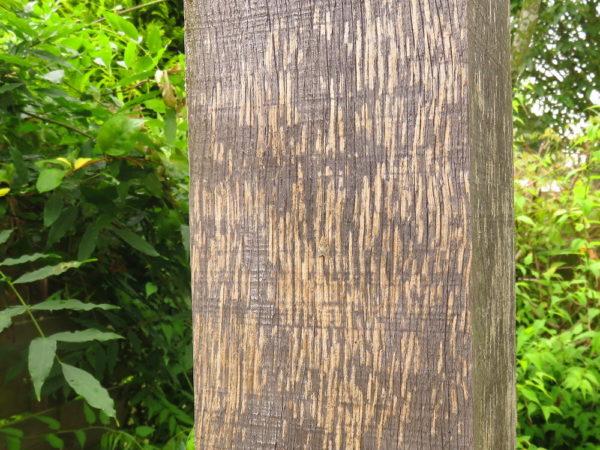 Wespen knagen aan hout