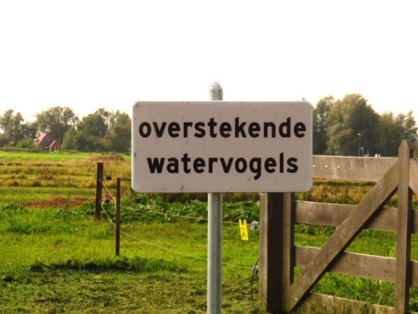 Woldlakebos bord Overstekende watervogels