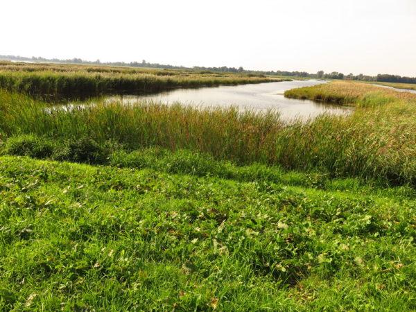 Watervogelgebied omgeving Woldlakebos